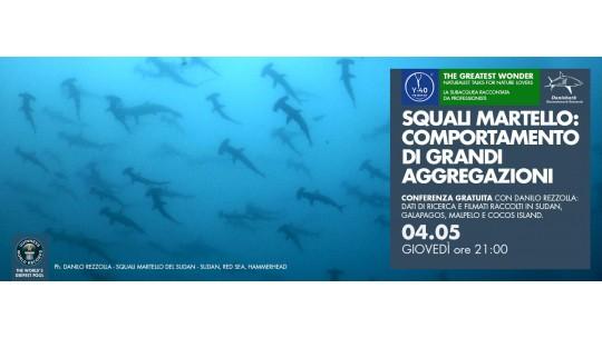 Y-40® The Deep Joy La piscina più profonda del mondo Squali Martello